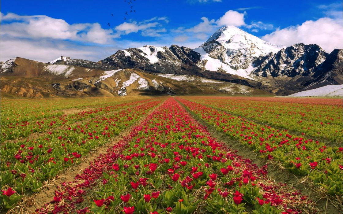 mountains sky flowers field landscape wallpaper