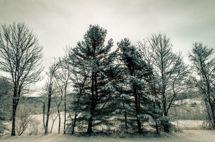 Seasons Winter Trees Nature snow wallpaper
