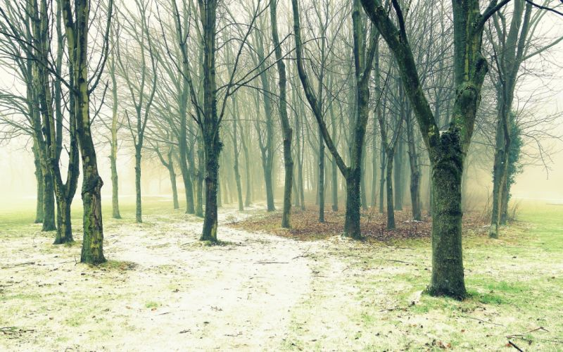 trees fog footpath nature wallpaper
