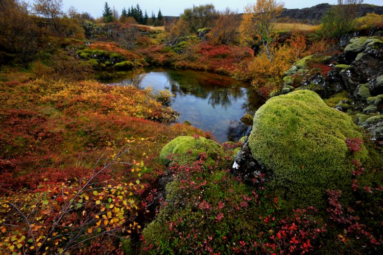 trees rocks moss lake autumn wallpaper