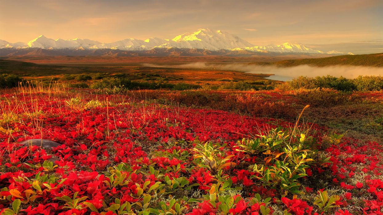 Flower lake mountains scenic wallpaper