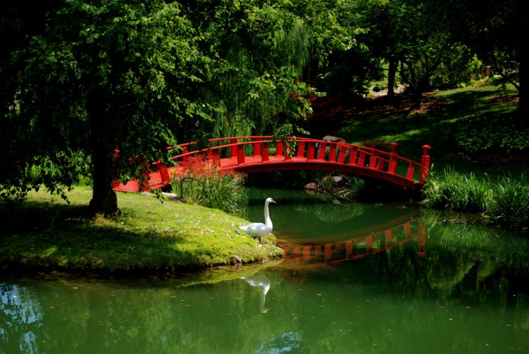 garden swan river bridge asian mood_JPG wallpaper