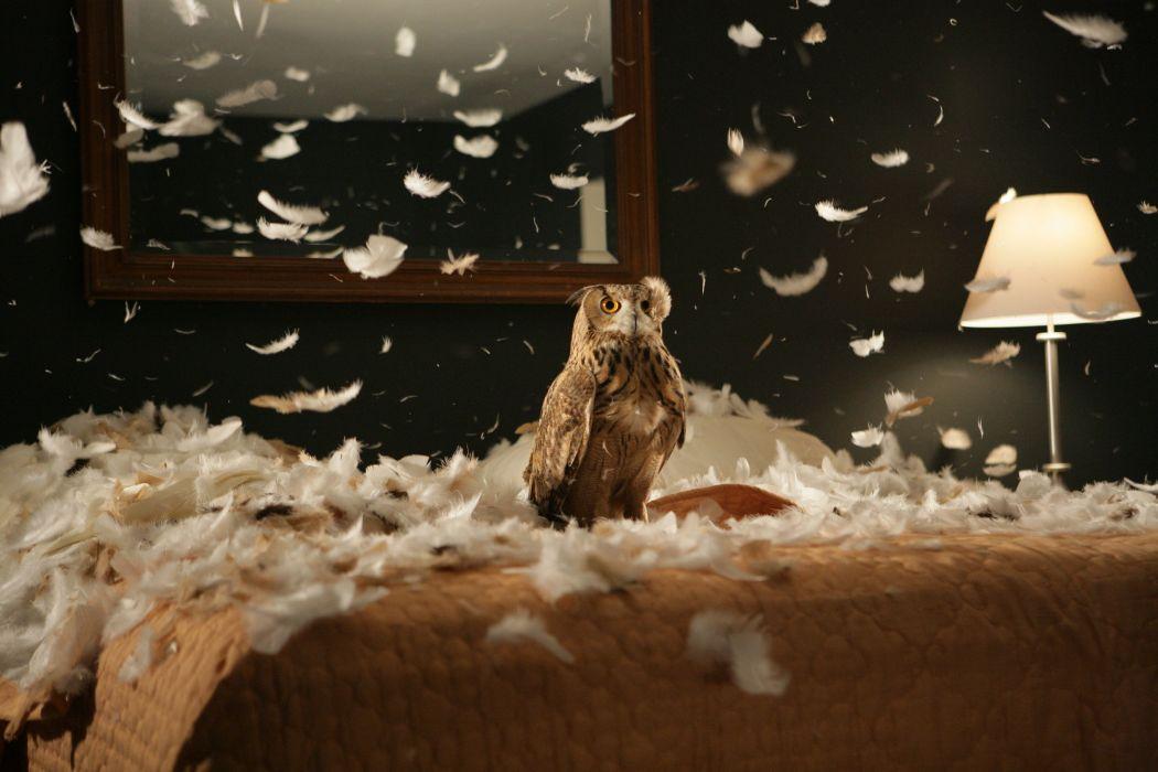 owl room interior feathers bird wallpaper