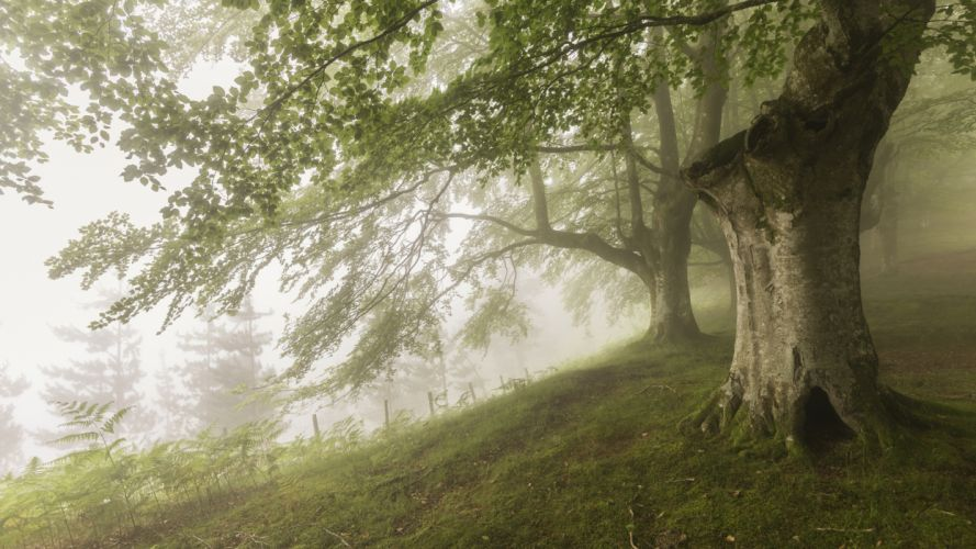 wood fog Nature forest f wallpaper