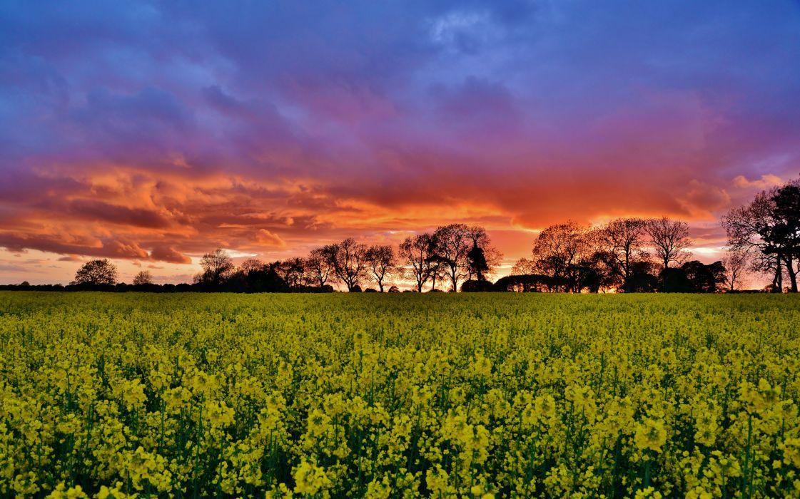 field  sunset  trees wallpaper