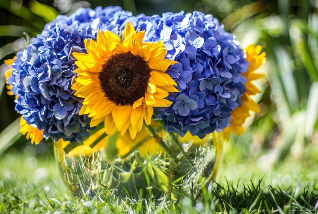 flowers blue flower sunflower bokeh wallpaper