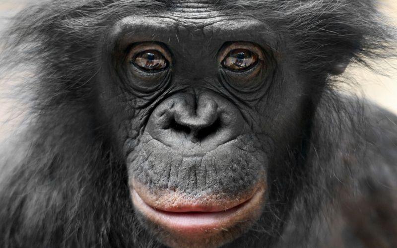 monkey nature sight wallpaper