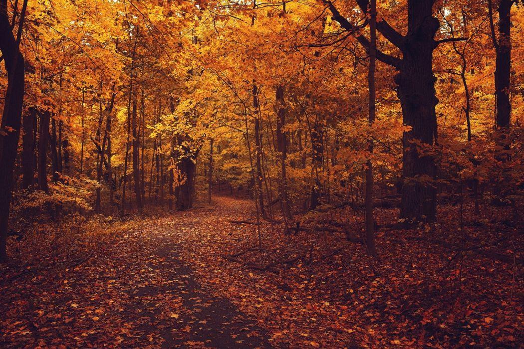 road foliage autumn wallpaper