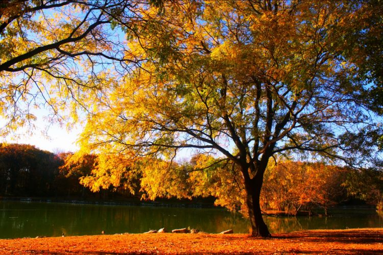 Seasons Autumn Trees Nature lake g wallpaper