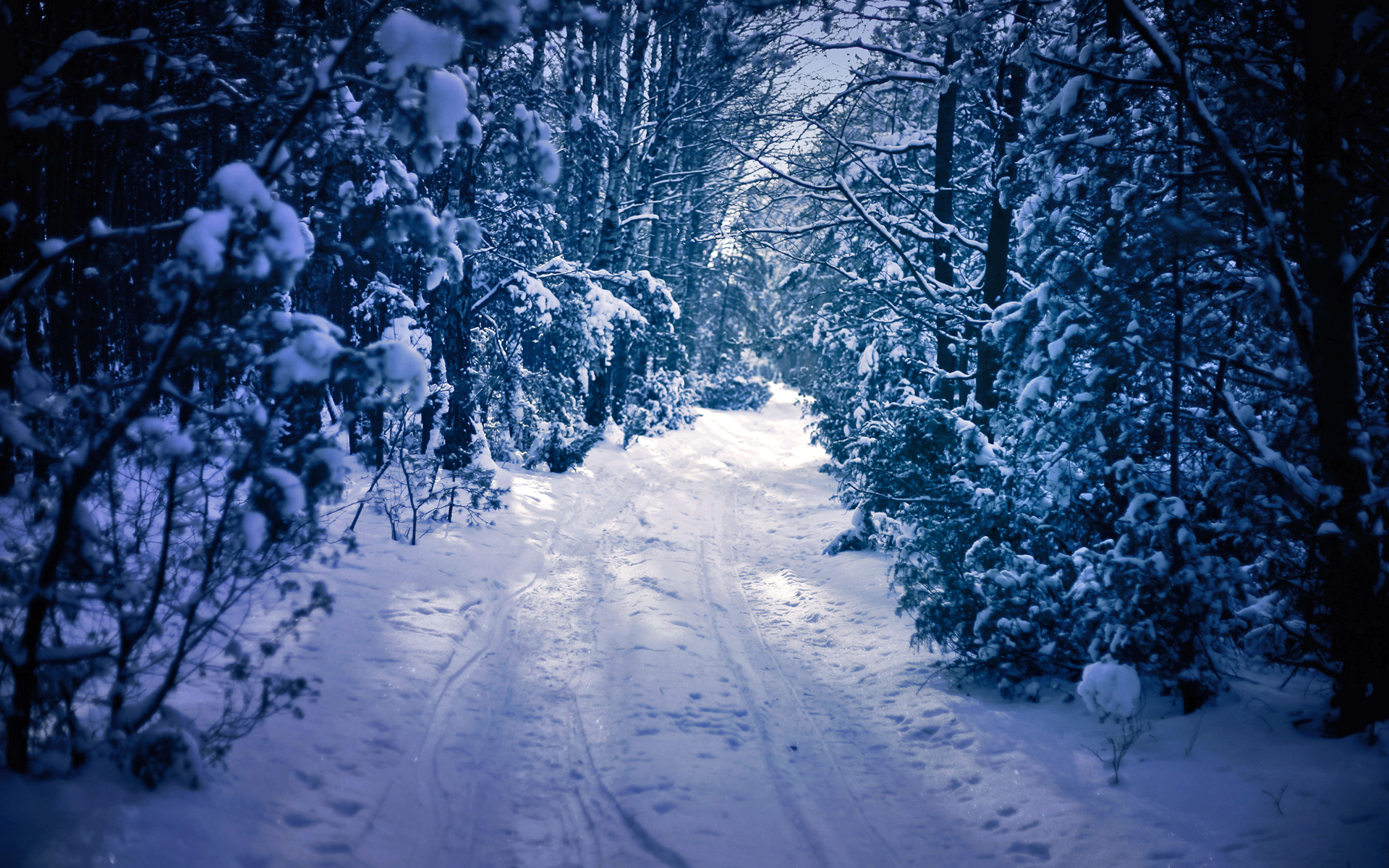 winter snow forest trees road wallpaper 1920x1200
