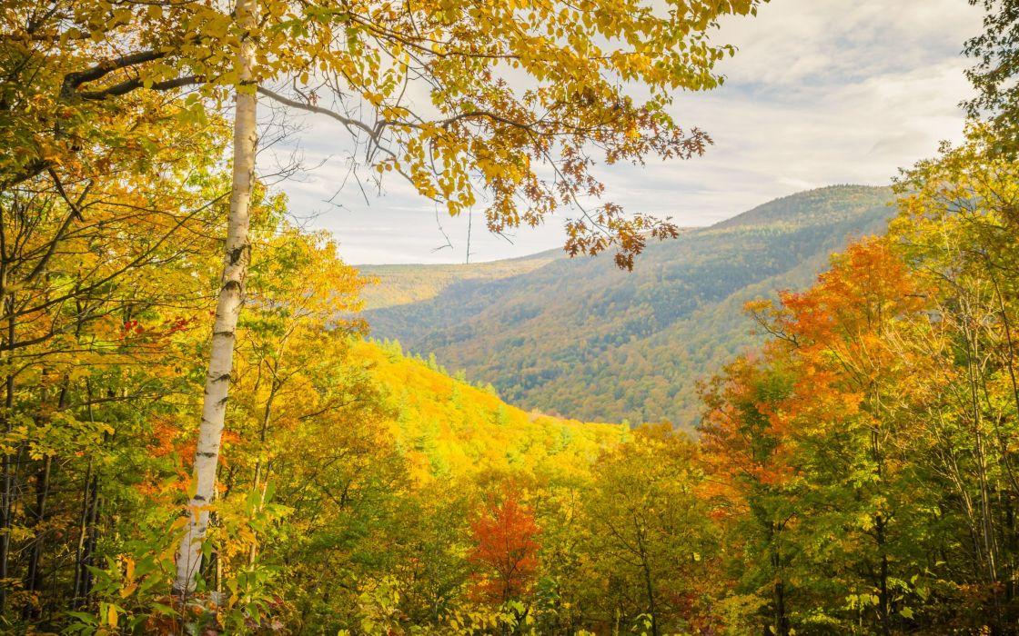 autumn trees mountains landscape wallpaper
