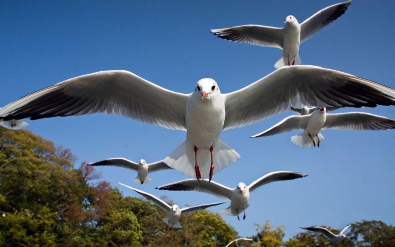 Birds Seagull bokeh wallpaper