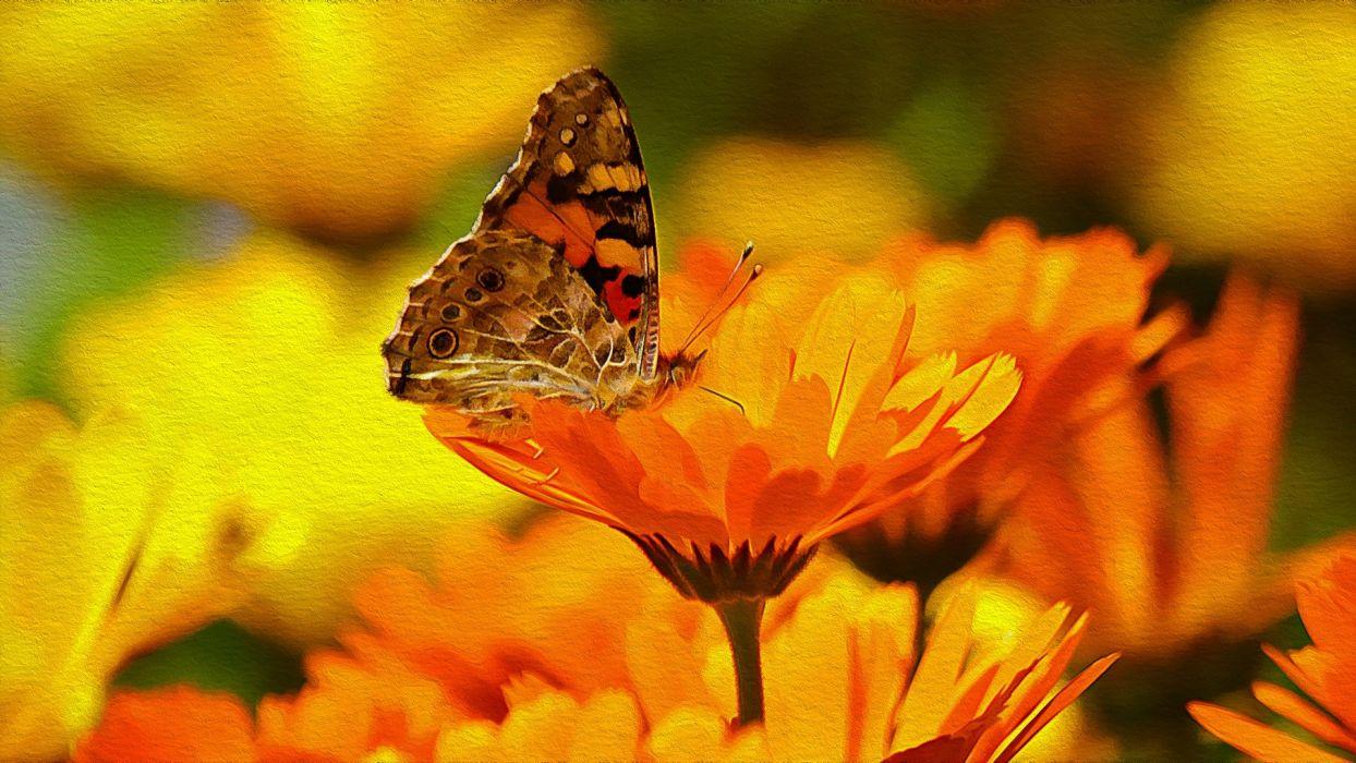 butterfly flower macro hdr wallpaper