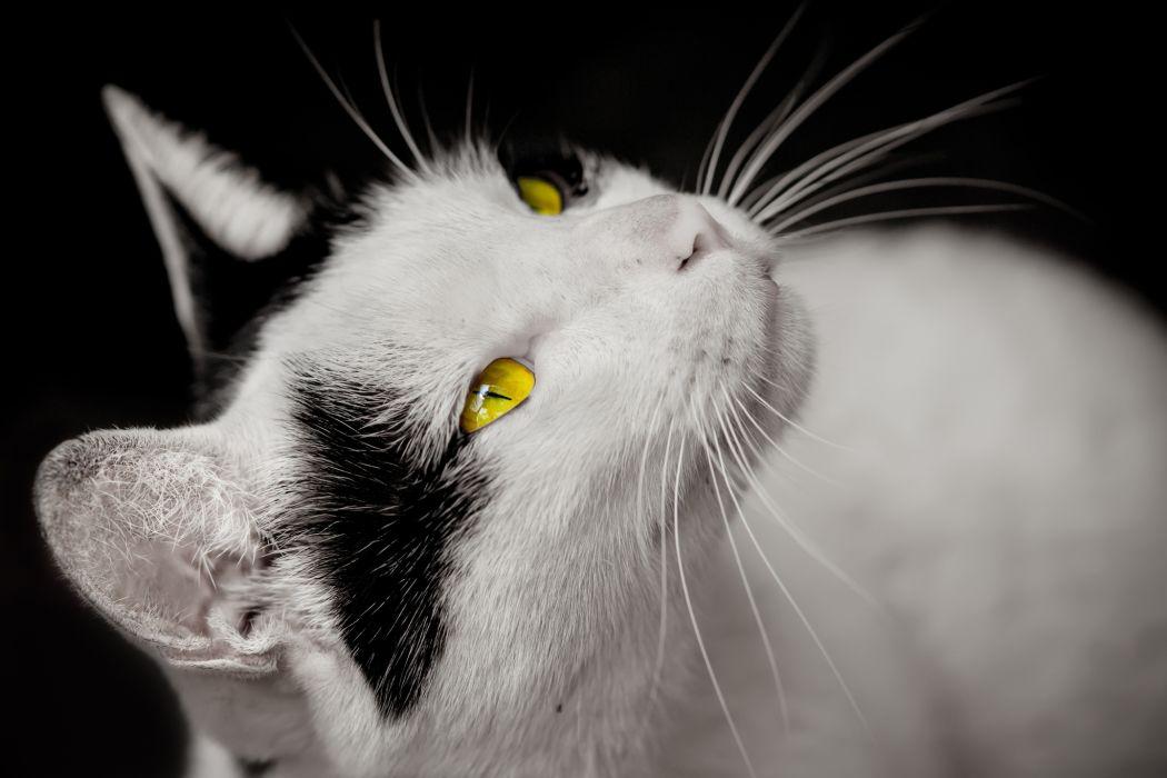eyes yellow eyes wallpaper
