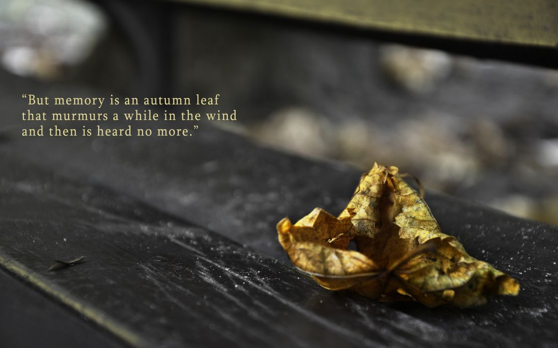 Leaf Autumn Memory Macro wallpaper