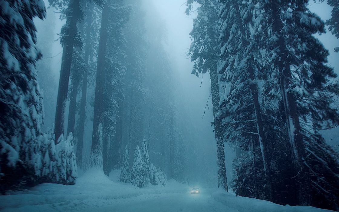 nature winter snow tree trees trees road vehicle car cold mood forest   g wallpaper