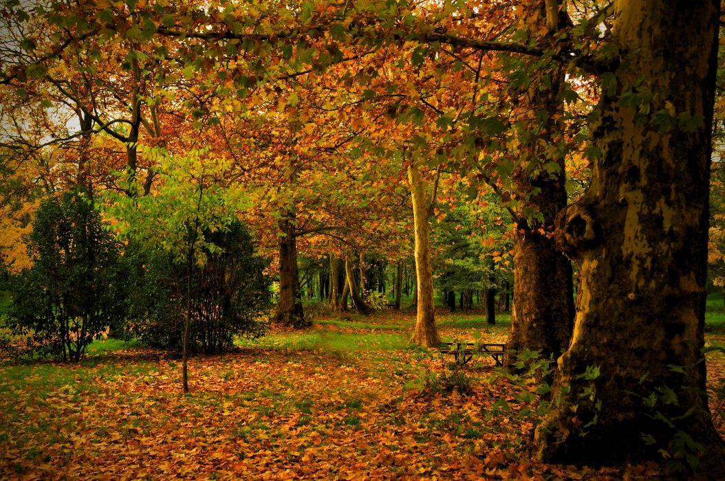 park autumn Spain Madrid Campo leaves trunk trees nature photo wallpaper