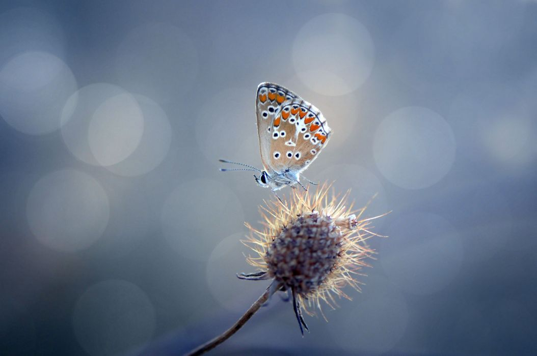 plant prickle butterfly glare wallpaper