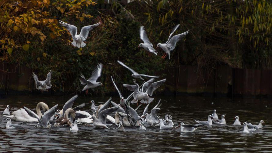 Birds Seagull bokeh h wallpaper