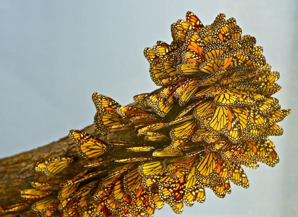 butterfly close-up bokeh     h wallpaper