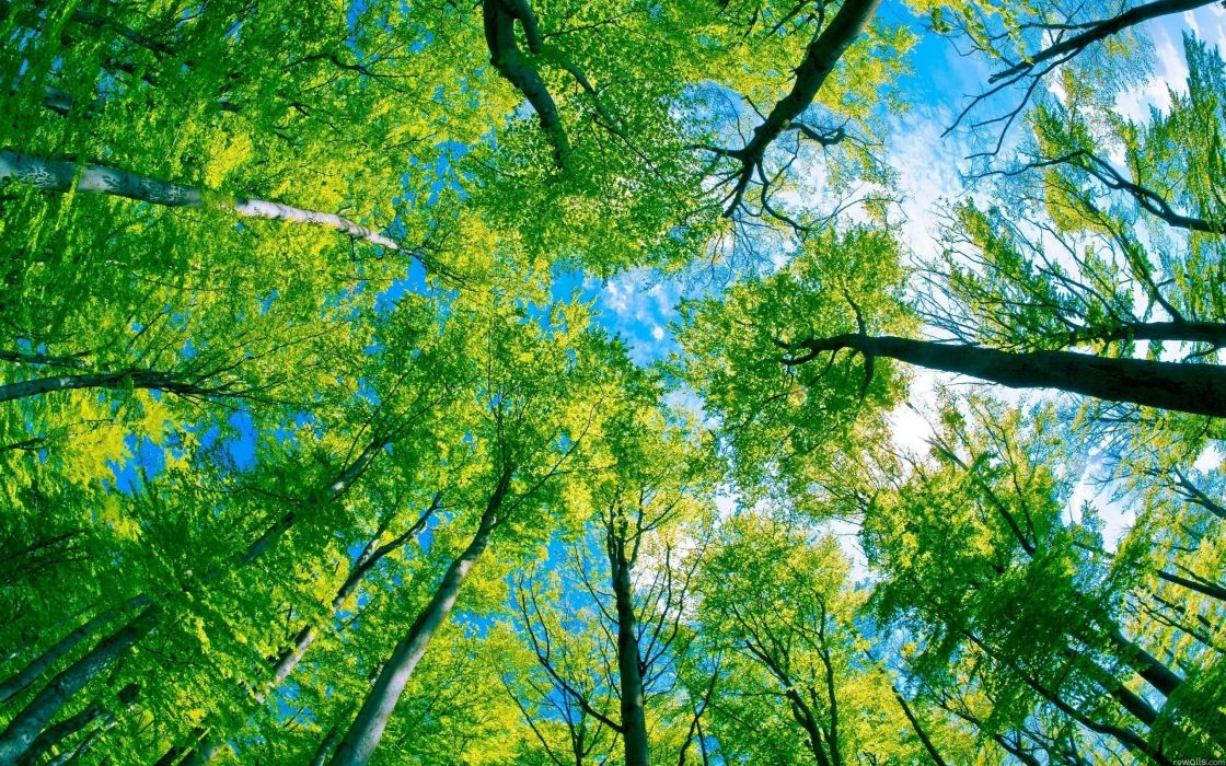 forest trees sky clouds wallpaper