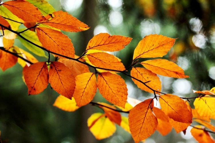 leaves orange yellow branch tree bokeh fall nature autumn wallpaper
