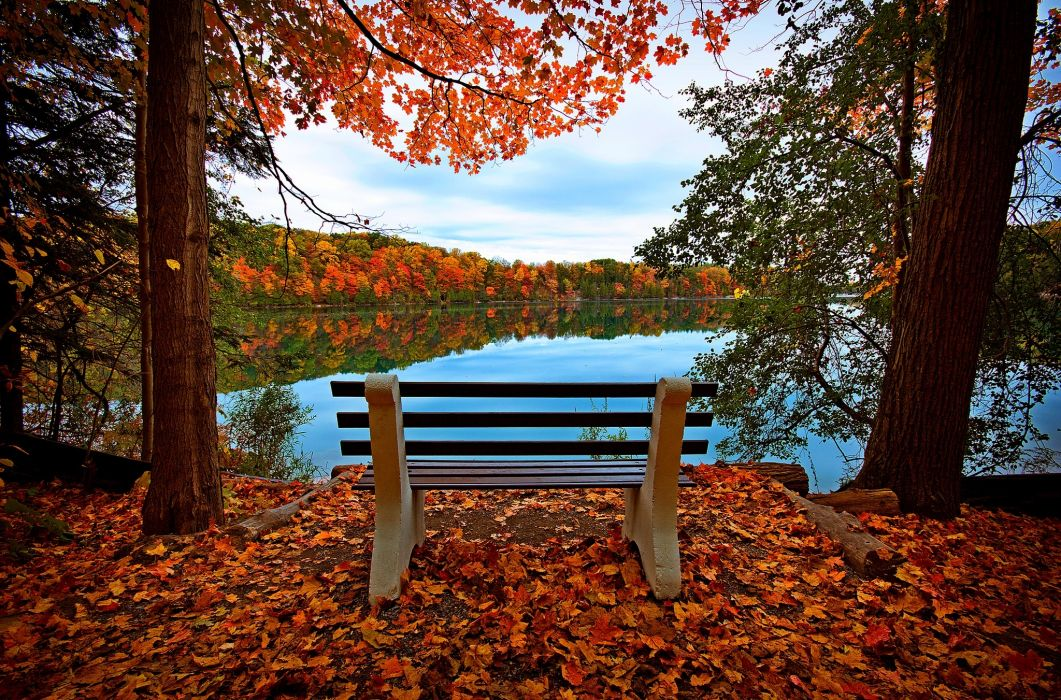 leaves trees forest autumn walk hdr nature river water reflection sky bench view leaves trees forest fall walk nature river water reflection sky bench view wallpaper