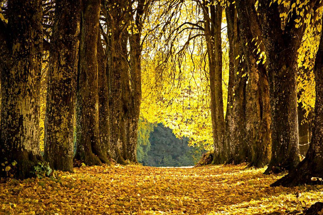 park alley leaves fallen yellow autumn wallpaper
