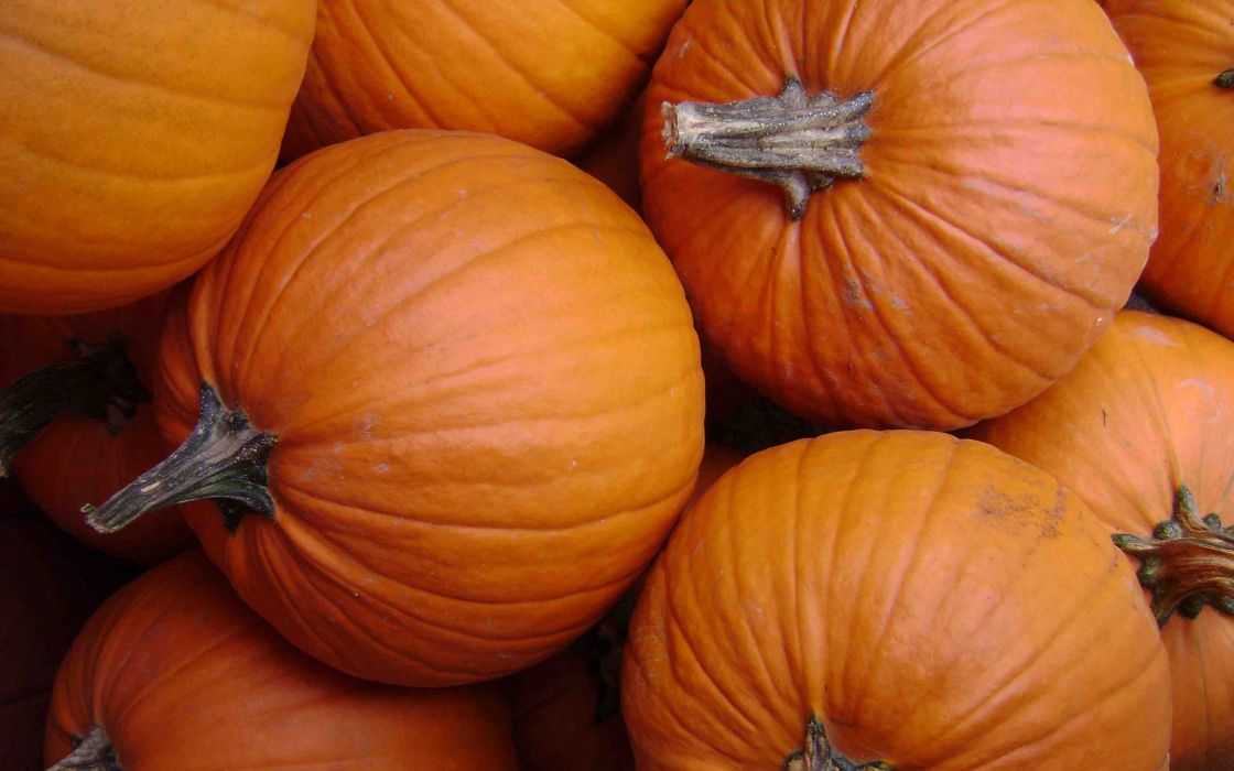 Pumpkin orange vegetable wallpaper