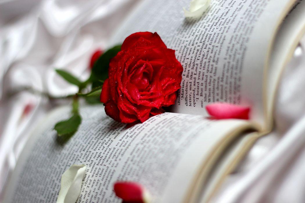 Roses Closeup Red Book Flowers bokeh     g wallpaper