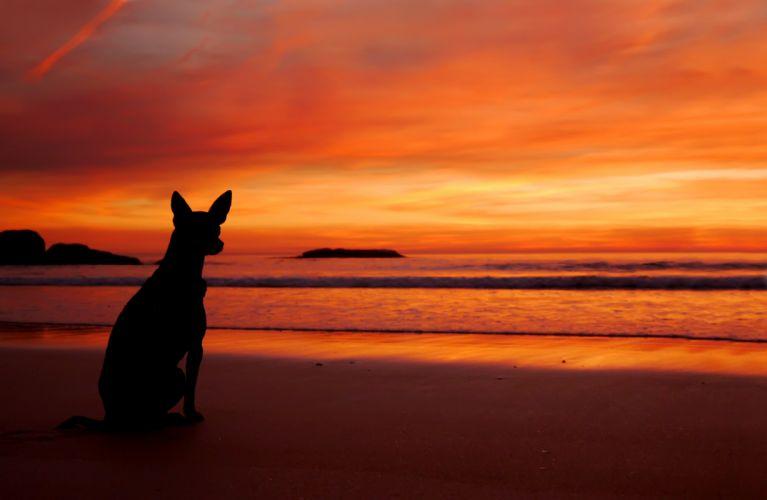sea beach sunset dog silhouette wallpaper
