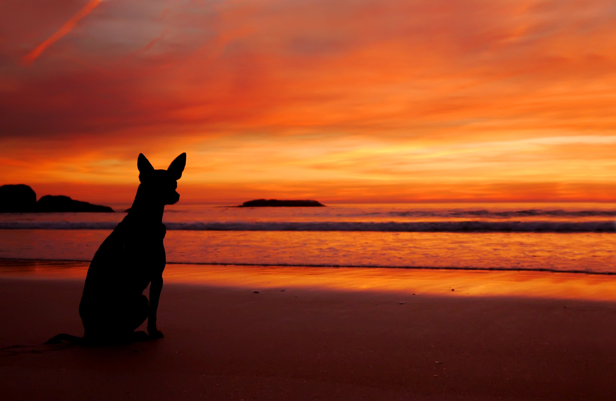 sea beach sunset dog silhouette wallpaper | 2048x1335 | 178578