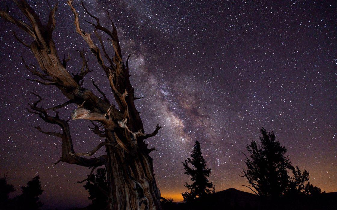 Tree Night Stars Galaxy Milky Way wallpaper