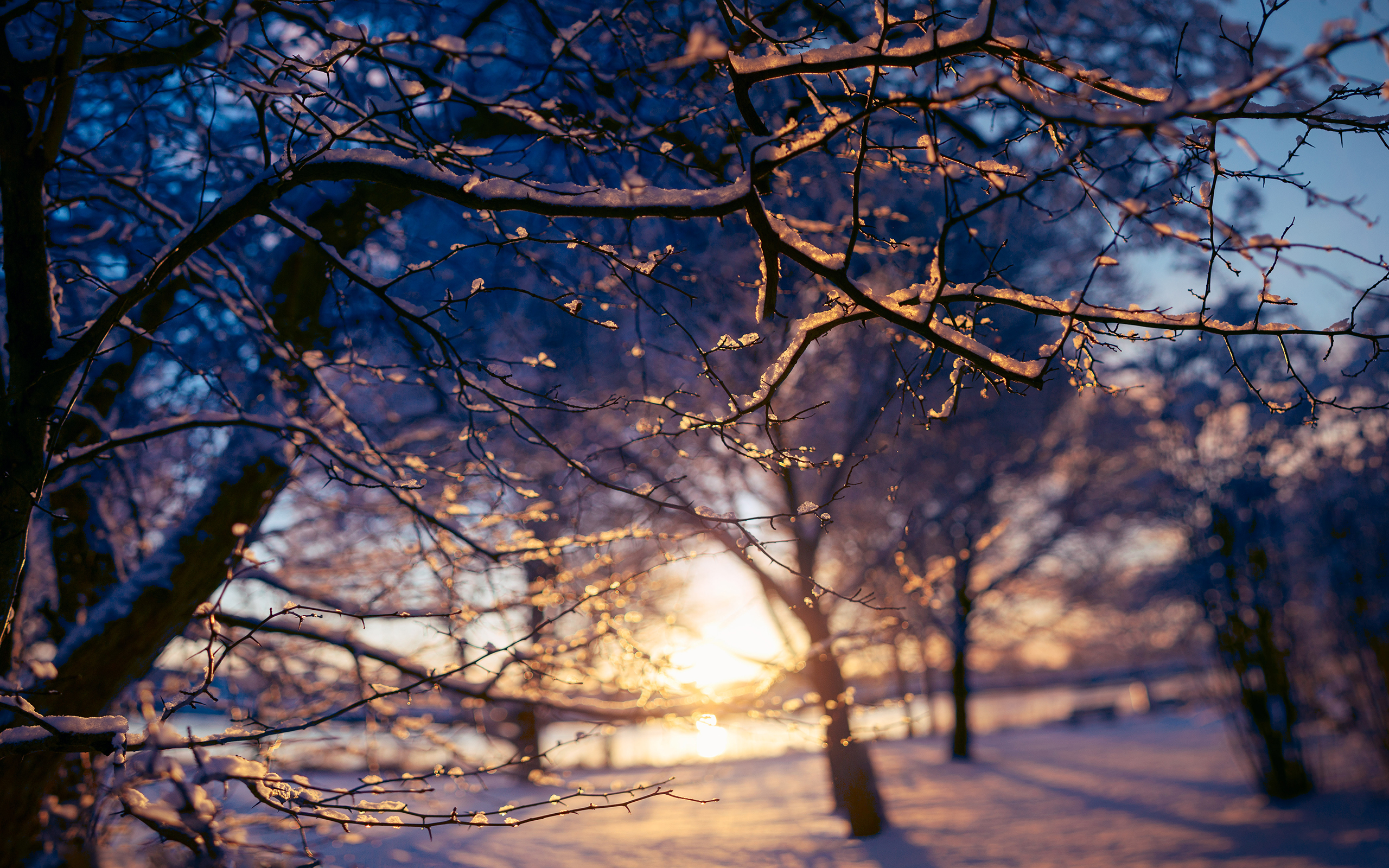 Beautiful Snowflake In The Sunlight: Branches Sunset Sunlight Snow Winter Wallpaper