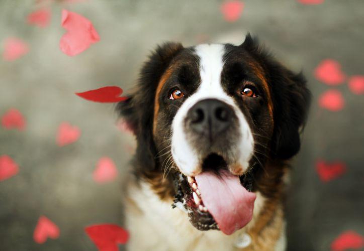 Dog Heart mood love bokeh wallpaper