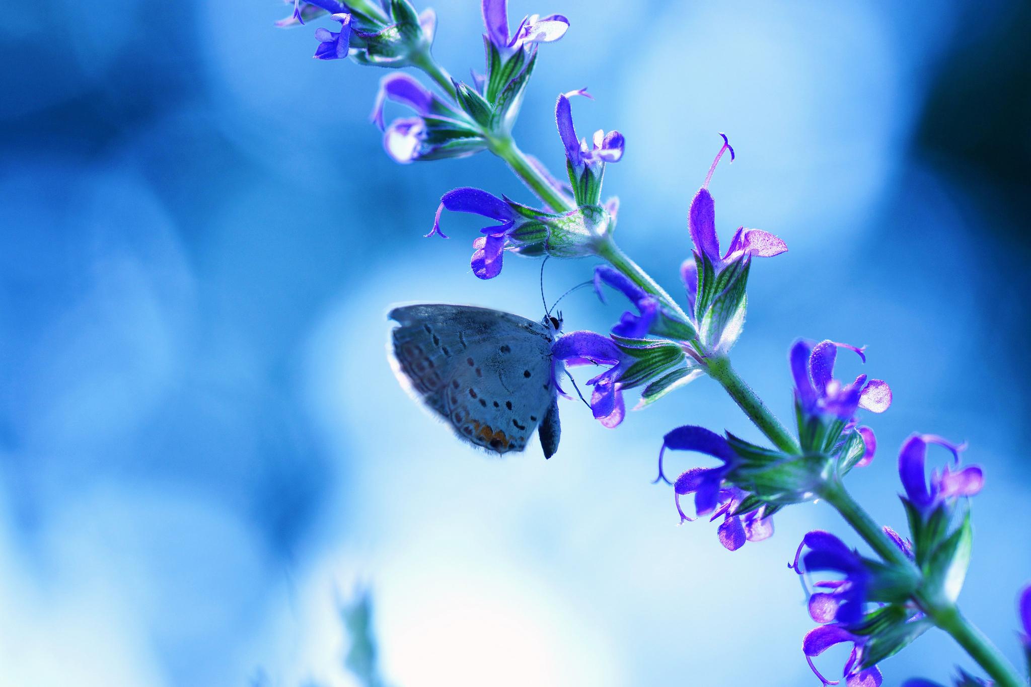 flower blue butterfly bokeh wallpaper | 2048x1365 | 179117 | wallpaperup