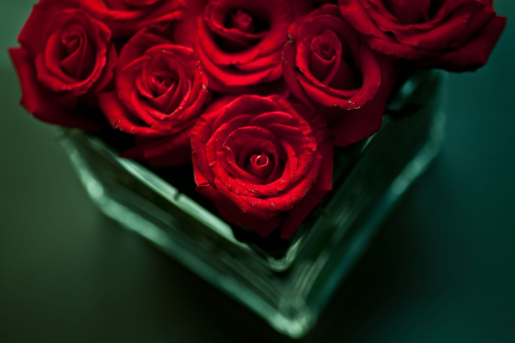 flowers bouquet roses red vase table wallpaper