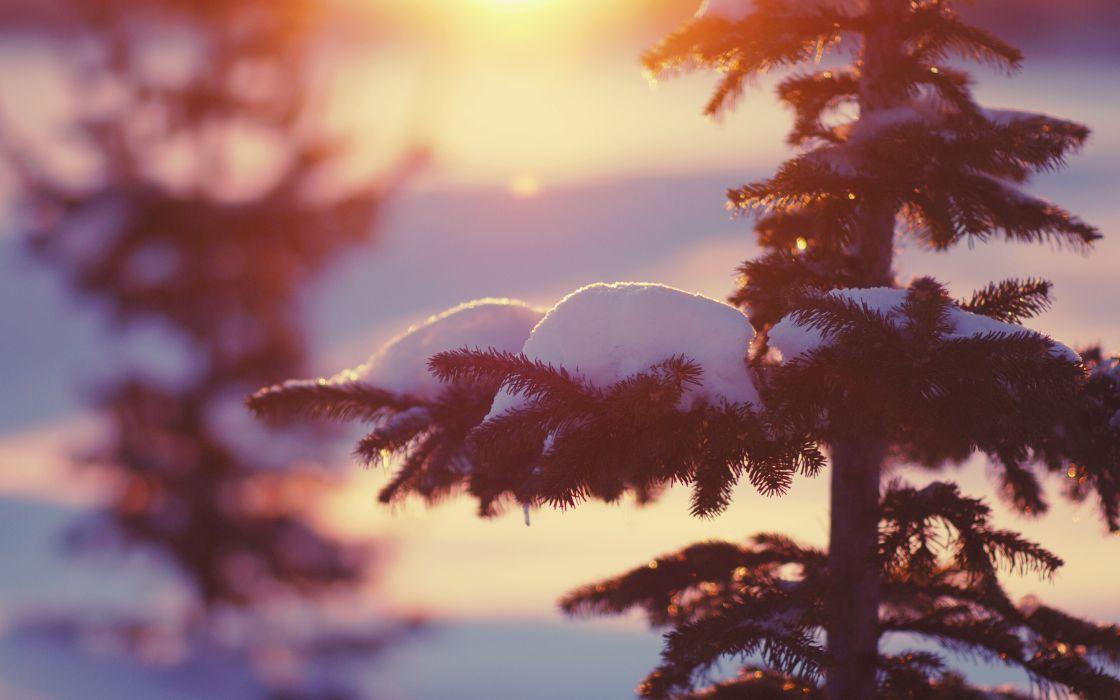 Nature winter snow trees light bokeh wallpaper