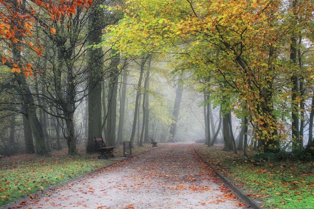 Parks Belgium Flemish Region Meise Fog Trees Nature autumn wallpaper