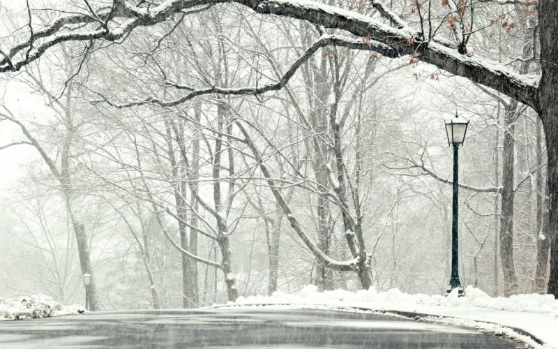 winter snow road trees landscape wallpaper