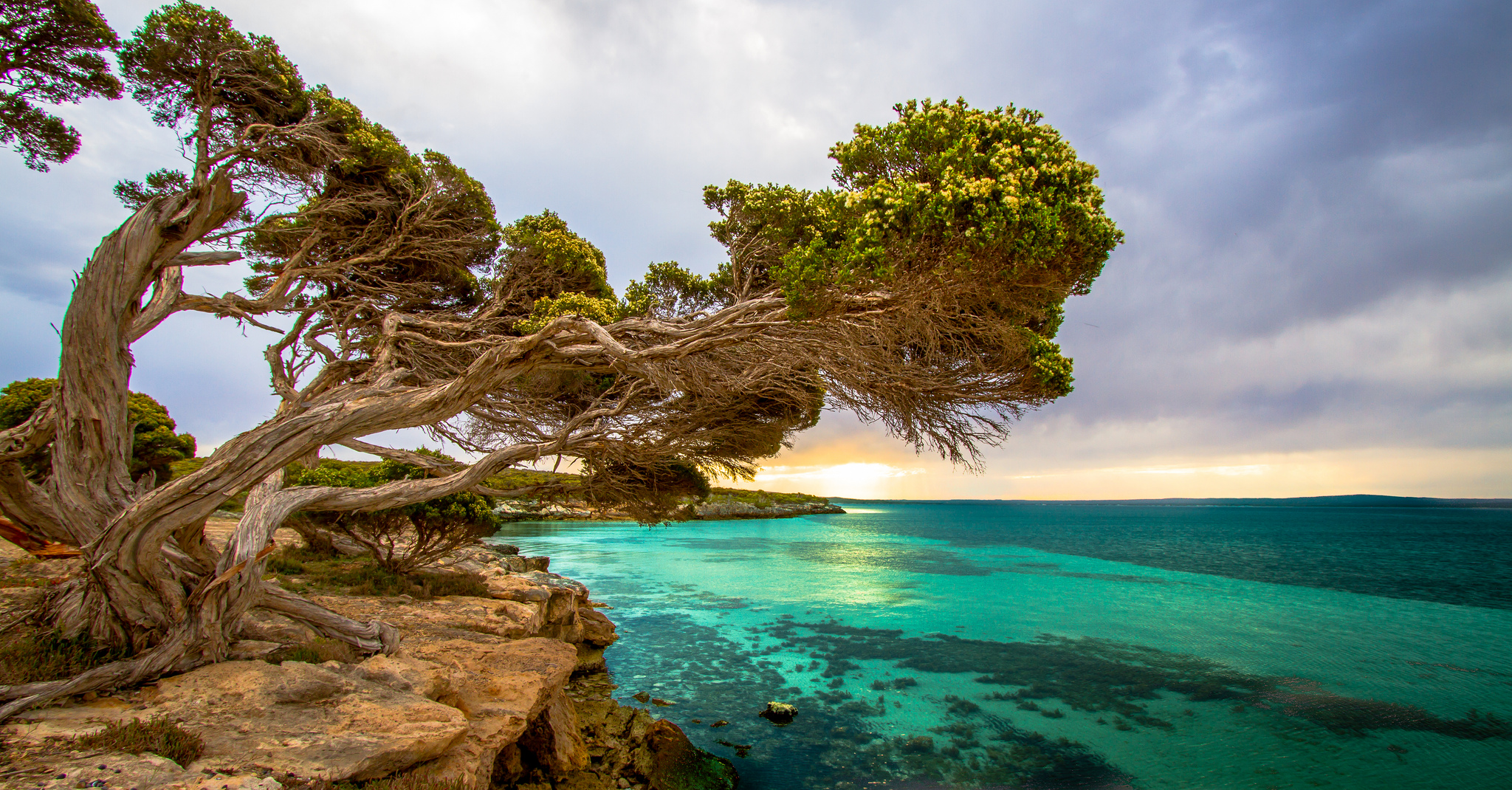 Port Lincoln Australia  city pictures gallery : Coastal Tree Port Lincoln South Australia wallpaper | 2048x1070 ...