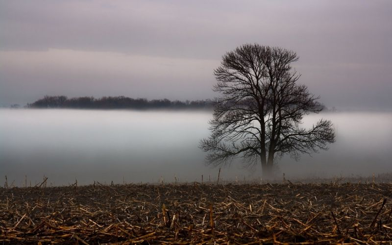 landscapes nature grass fog veil wallpaper