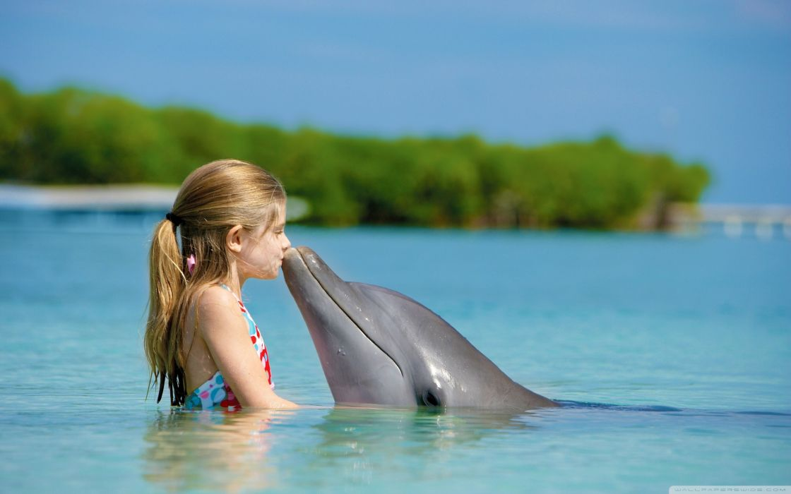 kissing dolphins friendship children sea wallpaper
