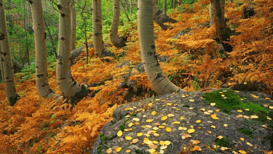 landscapes autumn Colorado ferns National Park rocky wallpaper