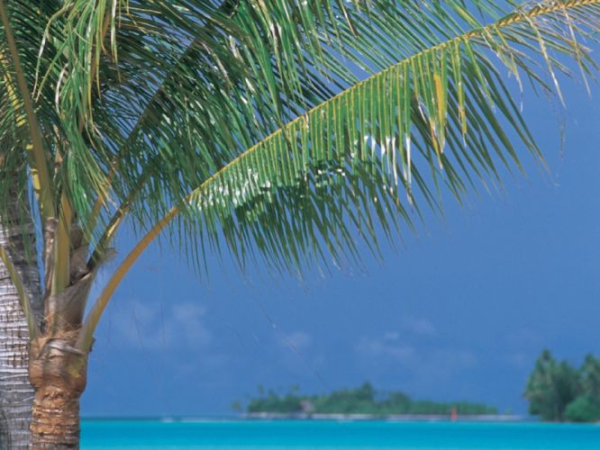 tropical palm trees wallpaper