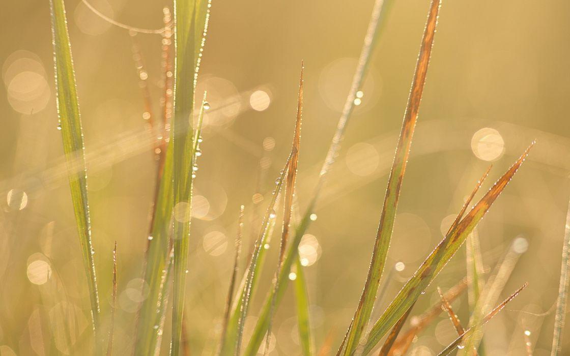 fields waterdrops wallpaper