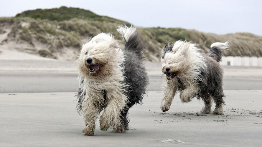 beach running dog mood f wallpaper