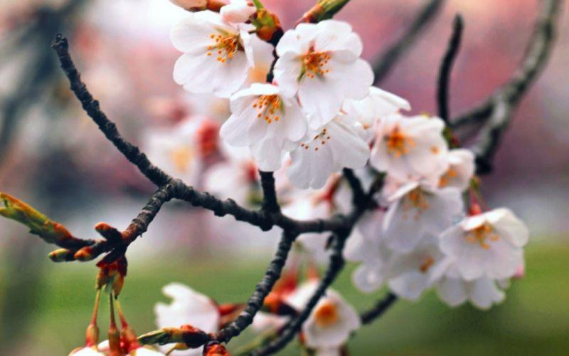 beautiful flowers mood blossom g wallpaper