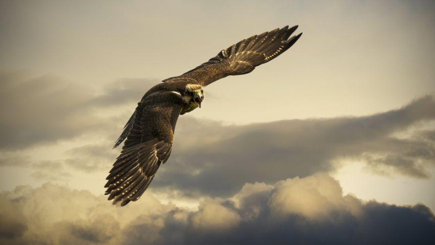 eagle flight sky wings wingspan clouds wallpaper