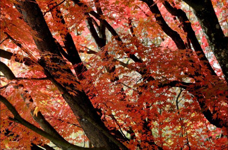 fall trees leaves nature autumn f wallpaper
